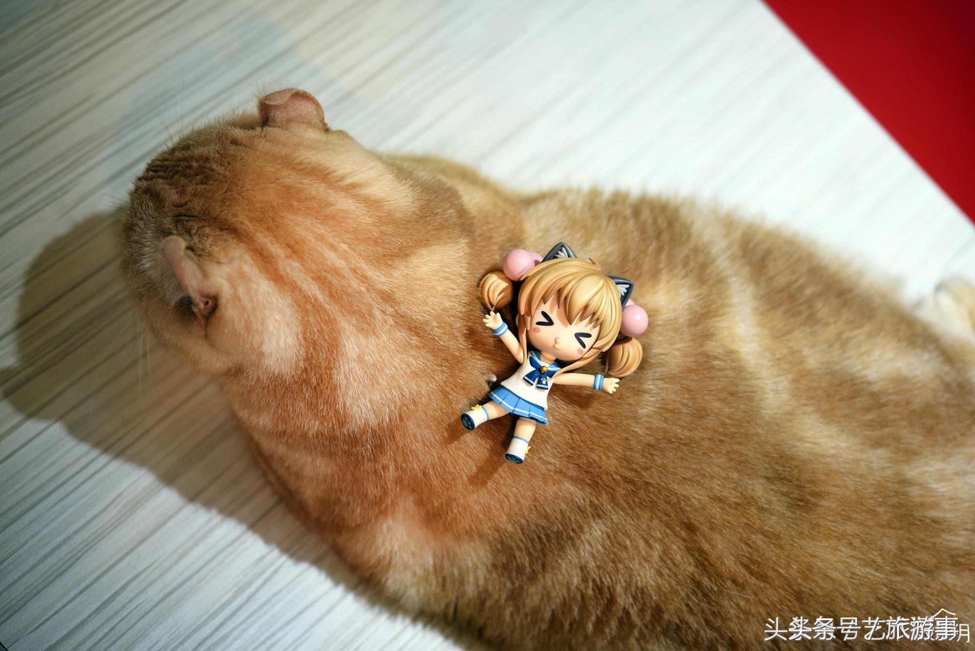 超可爱猫咪玩具组合