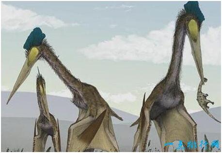 史上最大的飞行动物,风神翼龙翼展可达11米,能捕食霸王龙