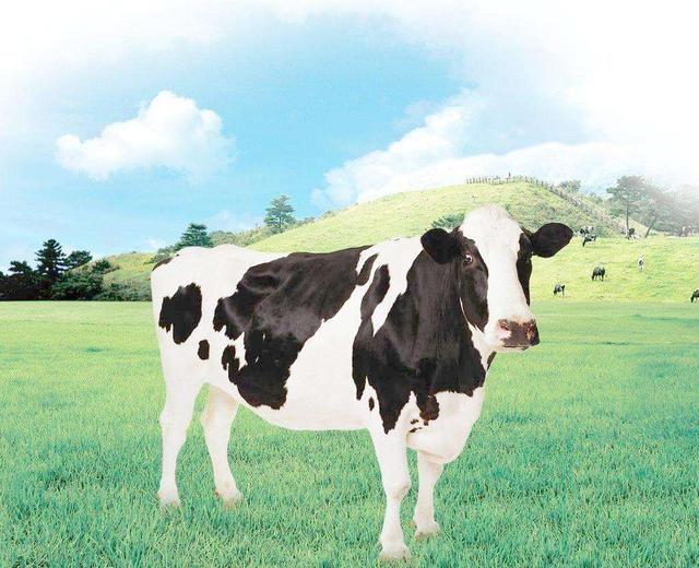 人与动物五月社区_动物 牛 640_520