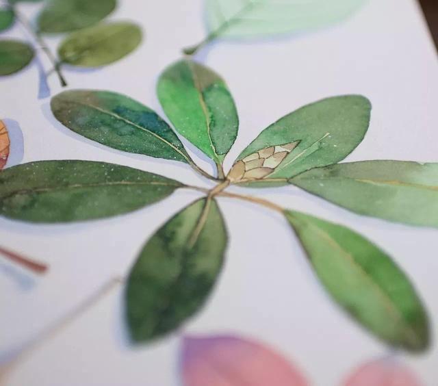 背景 壁纸 绿色 绿叶 盆景 盆栽 树叶 植物 桌面 640_564图片
