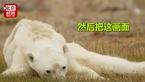 摄影师拍到骨瘦如柴北极熊 真相更让人心碎