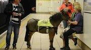 英国地铁现新客 首匹导盲马准备上岗