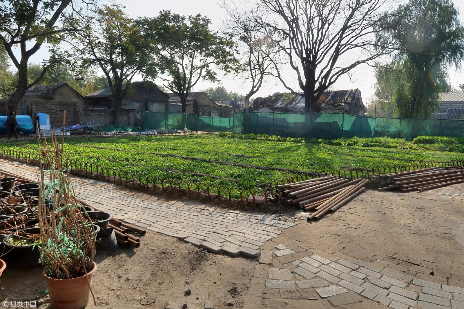 """北京前门现""""黄金菜地"""" 所处地段房价每平米超10万! - 周公乐 - xinhua8848 的博客"""