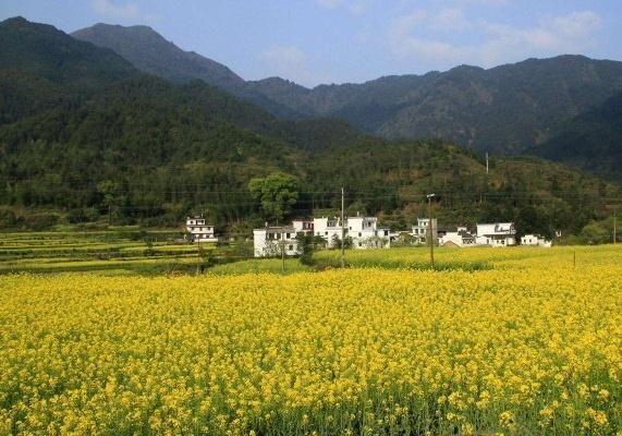 东风山河绿,春已不折柳。繁花看不尽,处处惹人留。
