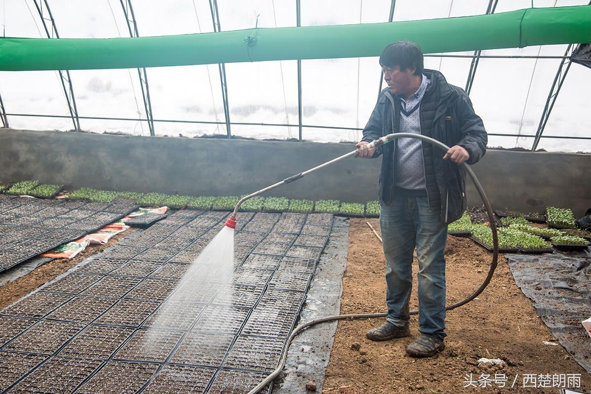 土豪!农村大叔将西瓜种在南瓜上,俩月收入70万