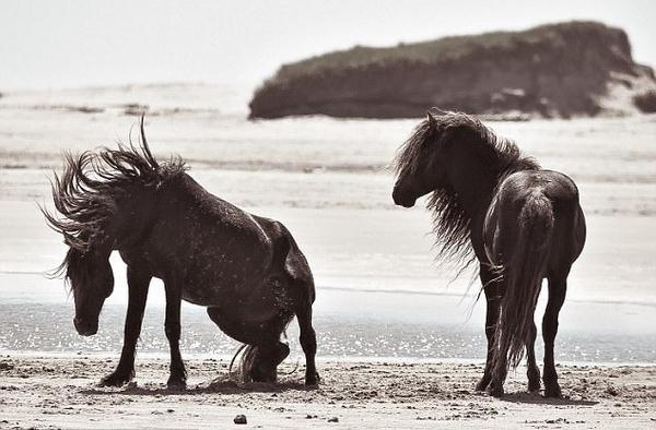 加拿大老妇独居孤岛40余年 与海豹野马为伴