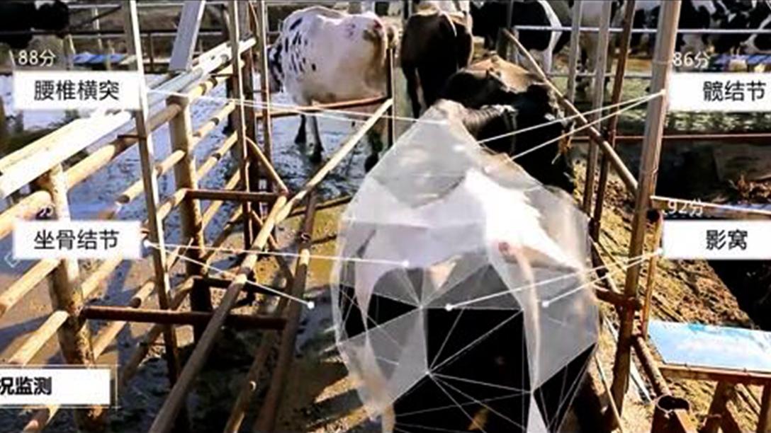 京东数科携手首农畜牧 以AI技术保障养殖业复工安全生产