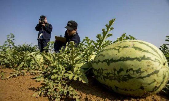 连美国都眼红了:中国专家让沙漠变农田,新疆或成为西北粮仓