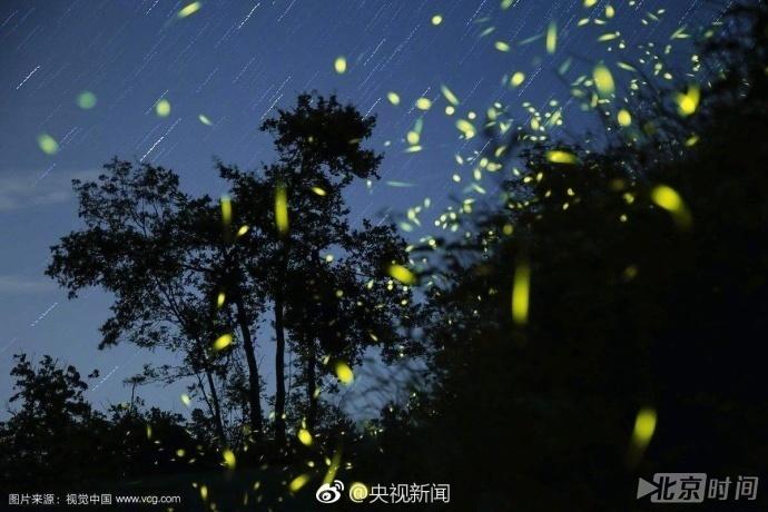 """AG捕鱼手机客户端:七夕节成萤火虫""""劫难日"""":拒绝""""残忍的浪漫""""_守护萤火虫!"""