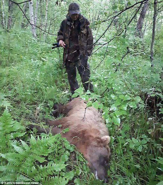 俄罗斯一公墓遭棕熊洗劫 吃掉了至少20具遗体