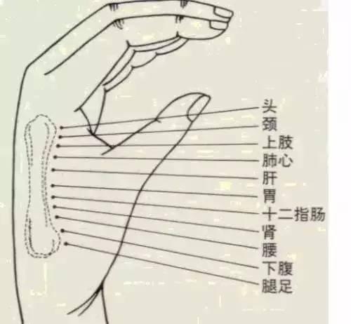 【网摘】身体好不好 摸摸这块骨头(第二掌骨)就知道! - 张艺之 - 张艺之的博客