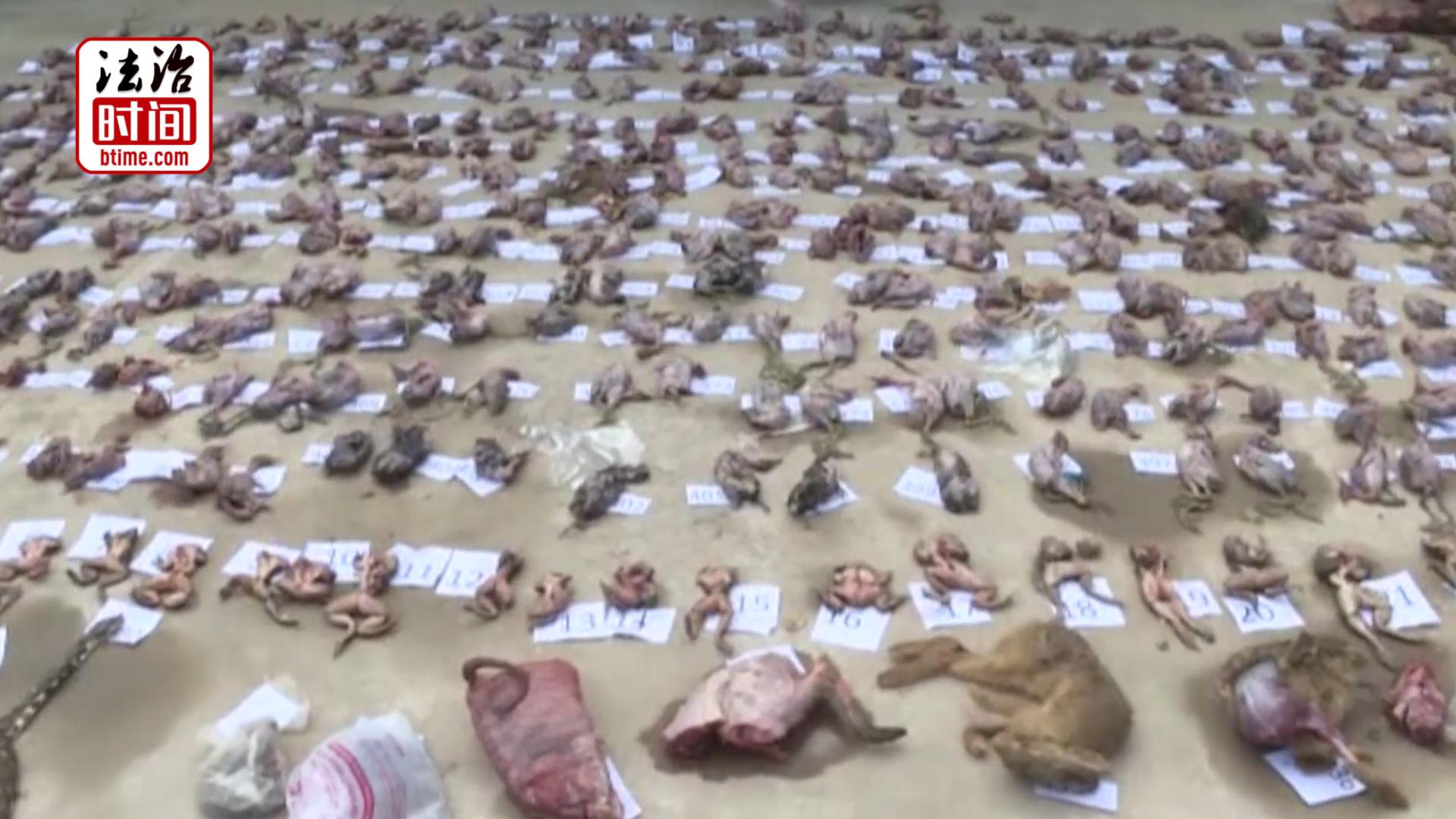 触目惊心!一村民非法收购野生动物400多只 家中冰柜藏满动物尸体