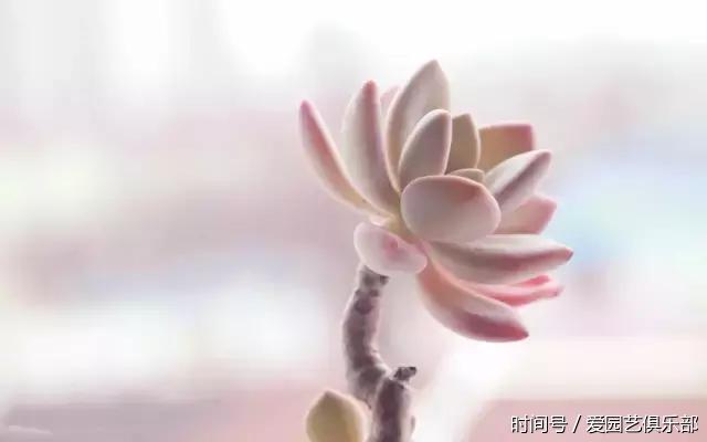 """立秋后肉肉也要防""""秋老虎"""" - 武汉老徐 - 武汉老徐的博客"""